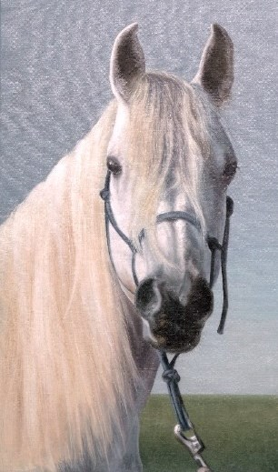 Portret konja belca